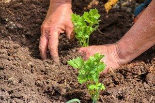 stress verlagen door lekker te tuinieren